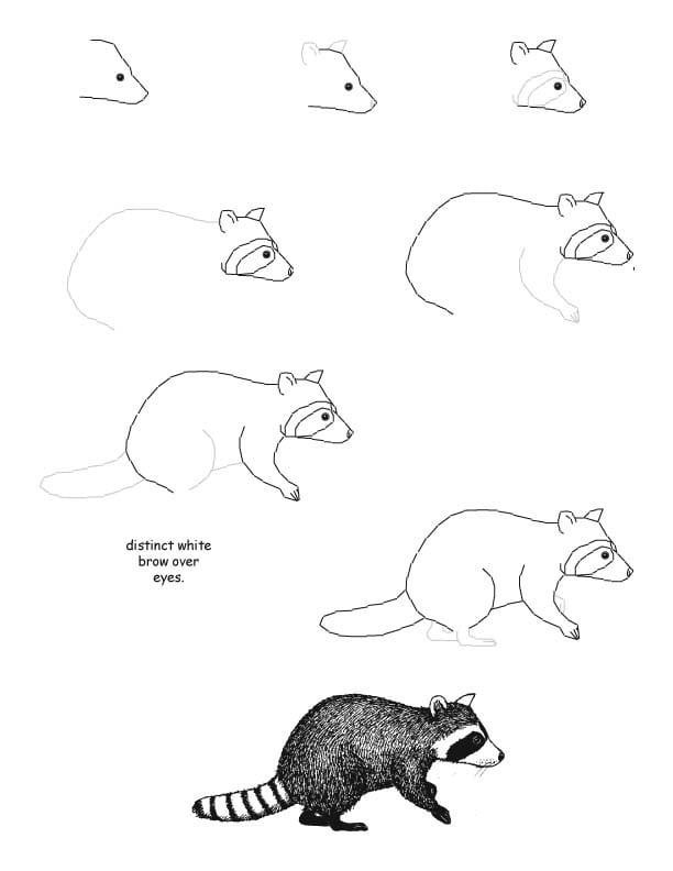-нарисовать-енота-поэтапно Как нарисовать енота