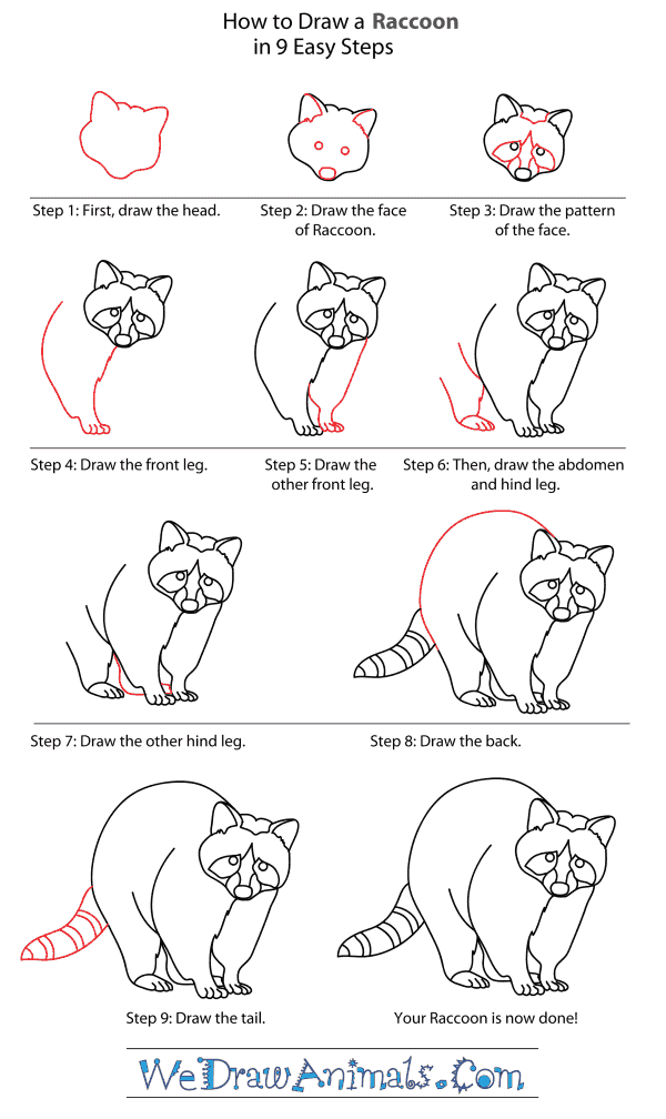 -нарисовать-реалистичного-енота Как нарисовать енота