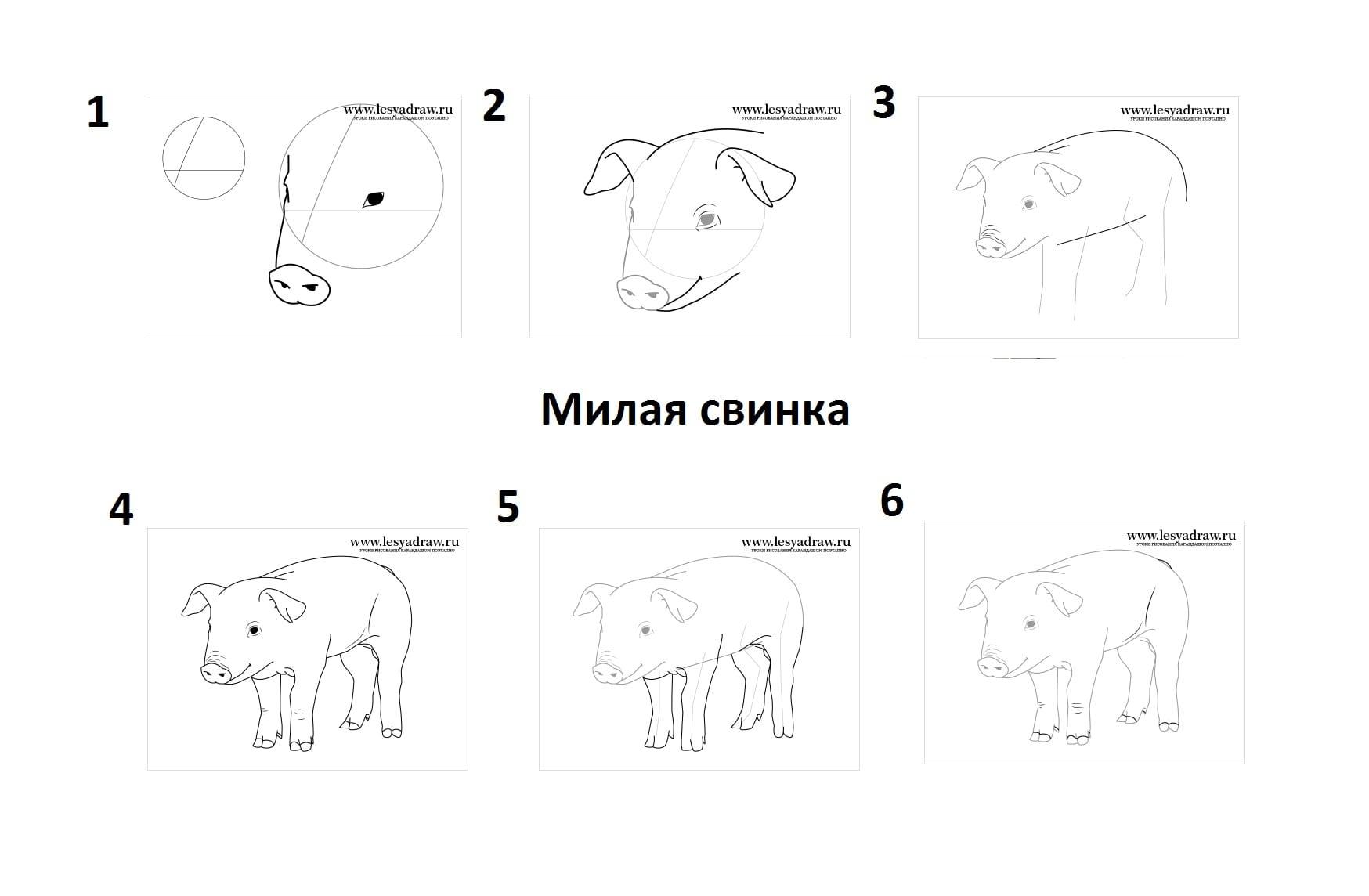 как нарисовать милую свинью