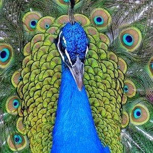 -раскраски-300x300 Природа раскраски