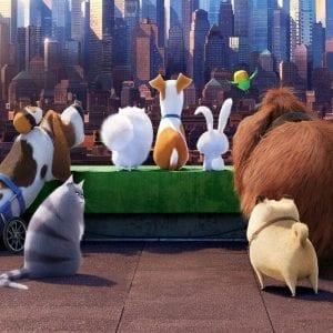 -жизнь-домашних-животных-300x300 Мультфильмы раскраски