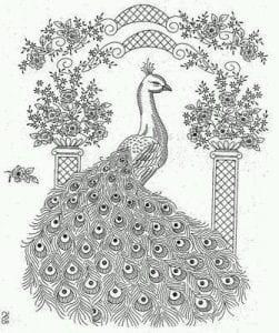 павлин картинка раскраска103