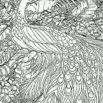 павлин картинка раскраска11