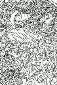 -картинка-раскраска11-201x300 Павлины