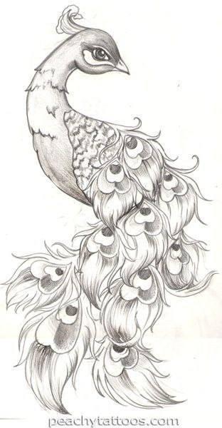 павлин картинка раскраска113