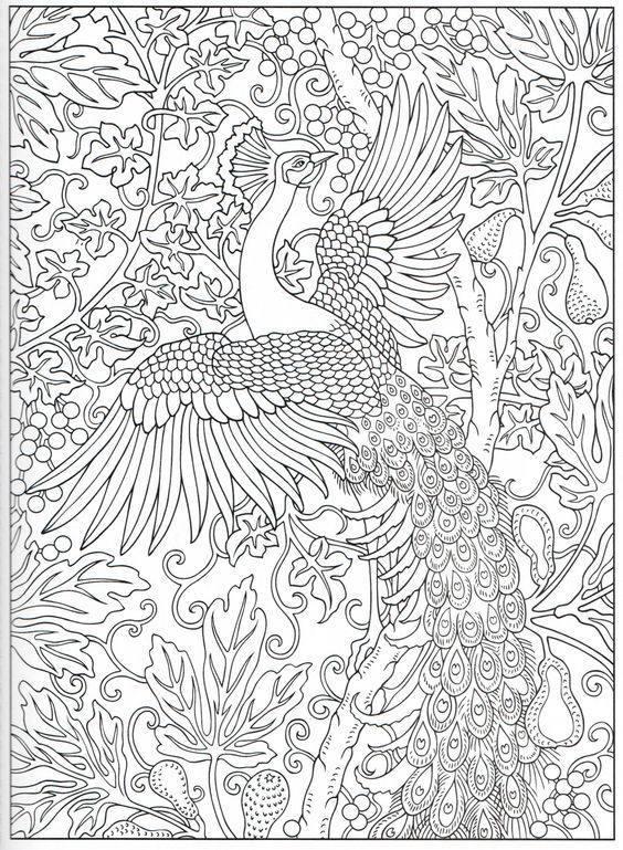 павлин картинка раскраска12