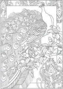 павлин картинка раскраска20