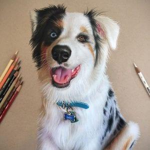 Собаки раскраски