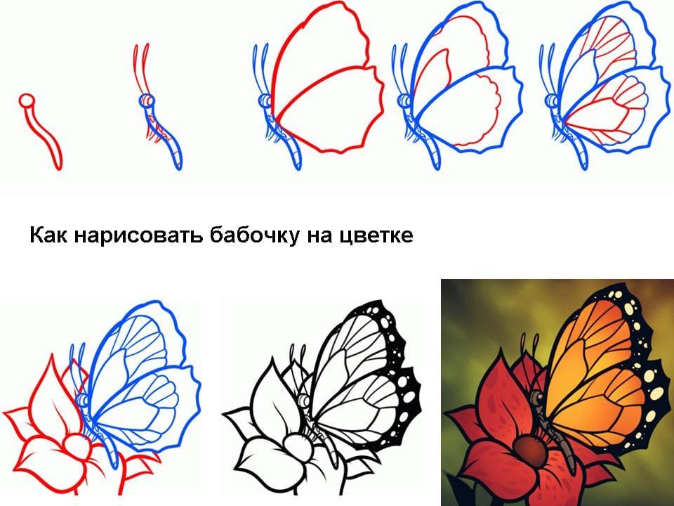 Бабочка на цветке нарисовать