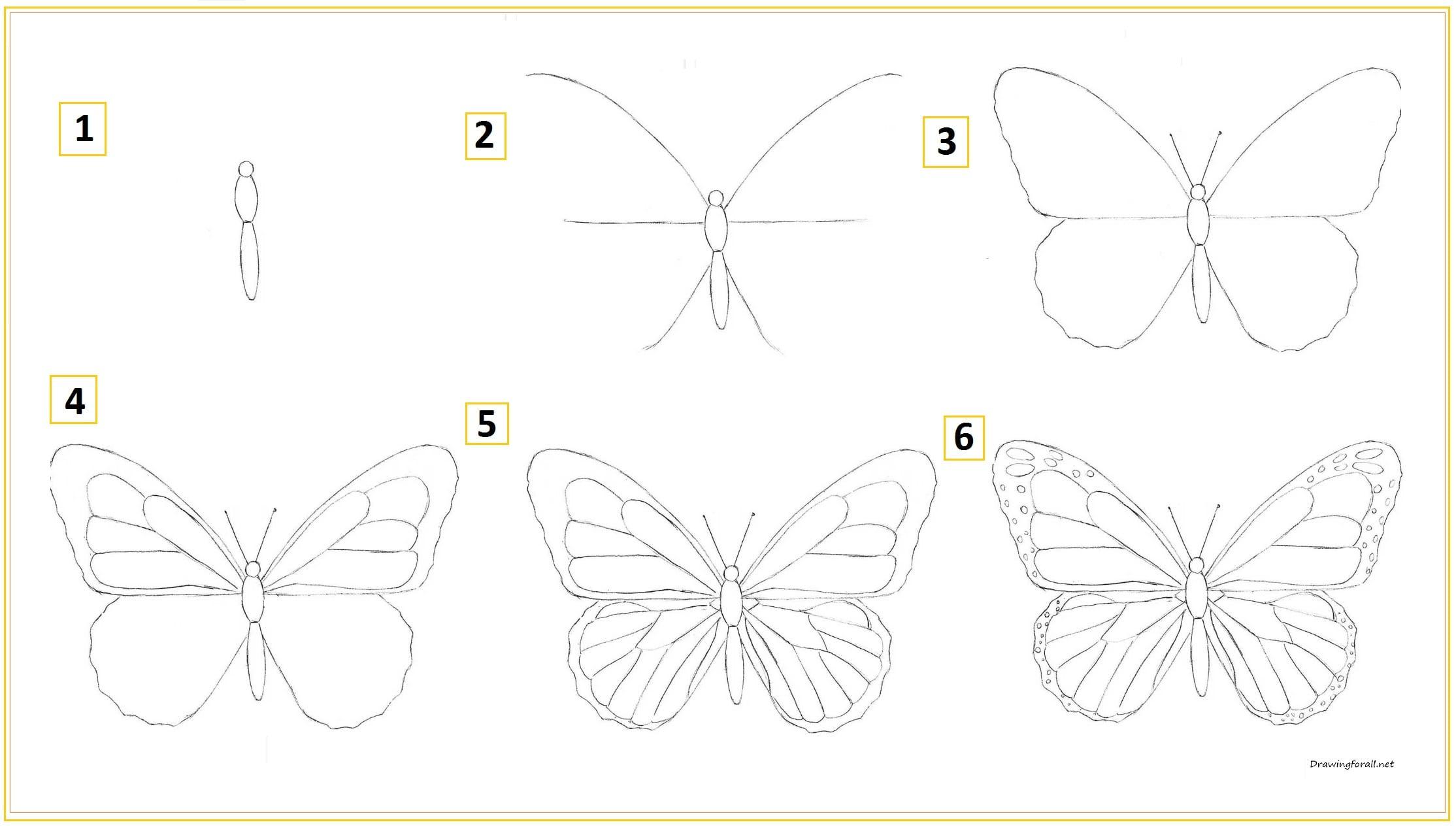 Как нарисовать бабочку для начинающих