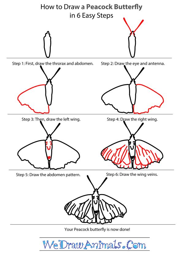 -нарисовать-бабочку-павлина Как нарисовать бабочку поэтапно