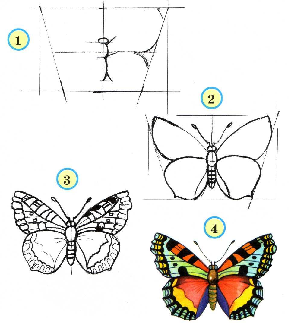 Красивая бабочка нарисовать