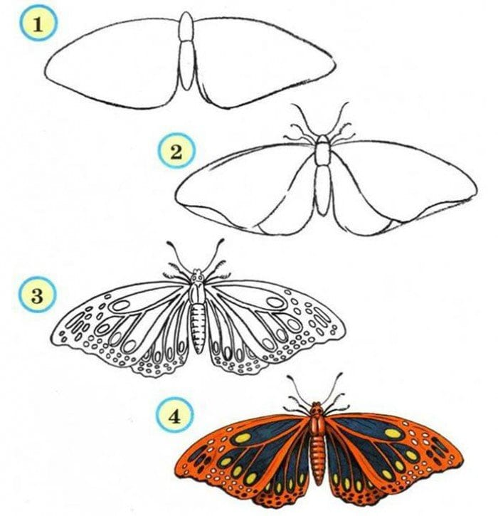 Красная бабочка нарисовать