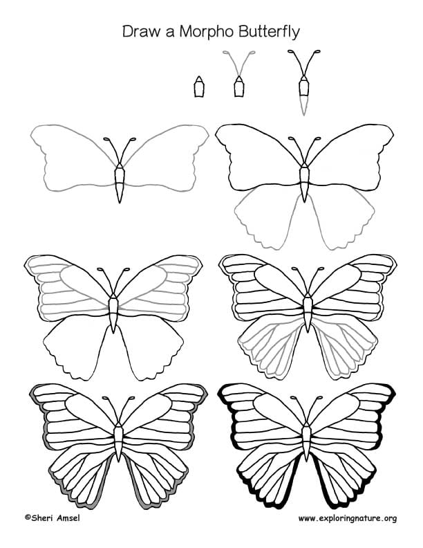 -бабочку-Морфо Как нарисовать бабочку поэтапно
