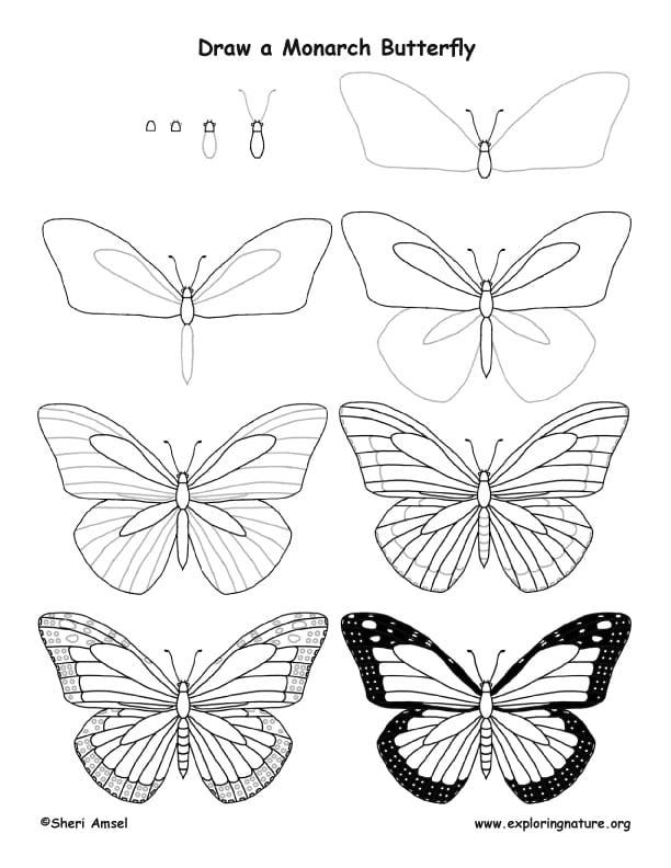 -бабочку-монарха Как нарисовать бабочку поэтапно