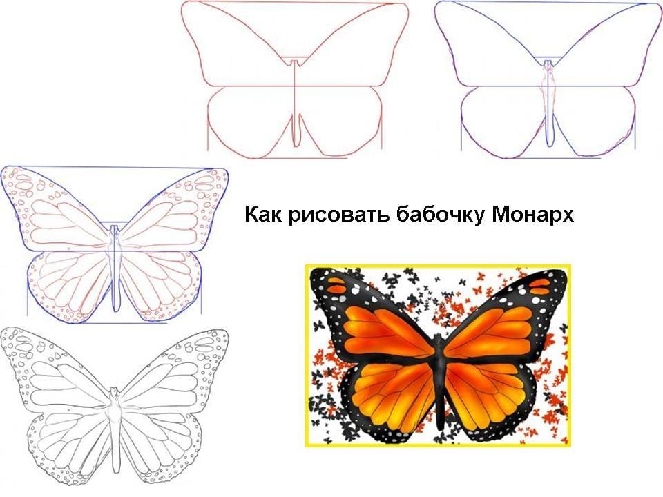 -монарха Как нарисовать бабочку поэтапно