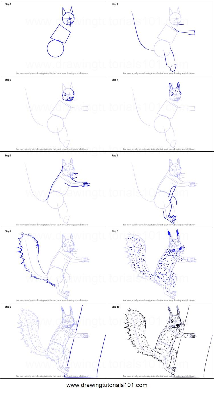 -на-дереве Как нарисовать белку