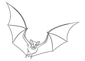 Вампир картинки раскраски (8)