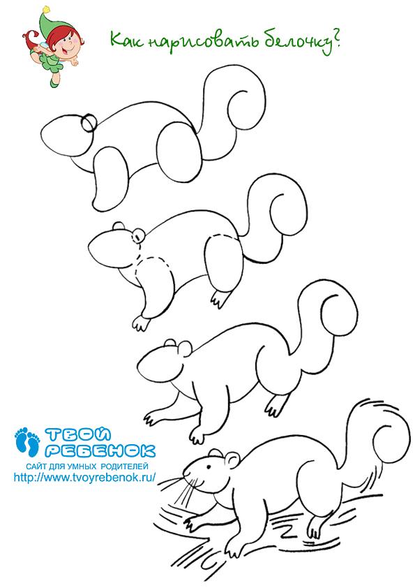 -нарисовать-белочку Как нарисовать белку