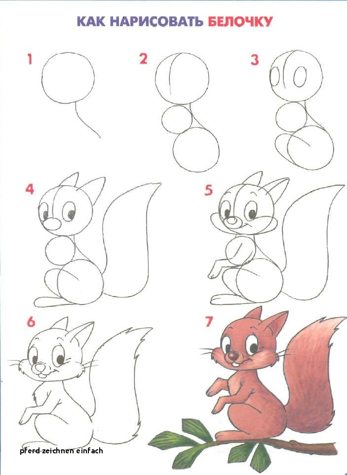 как легко нарисовать белку