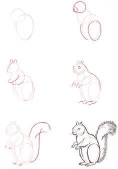 -белку Как нарисовать белку