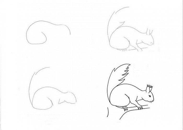 -карандашом Как нарисовать белку