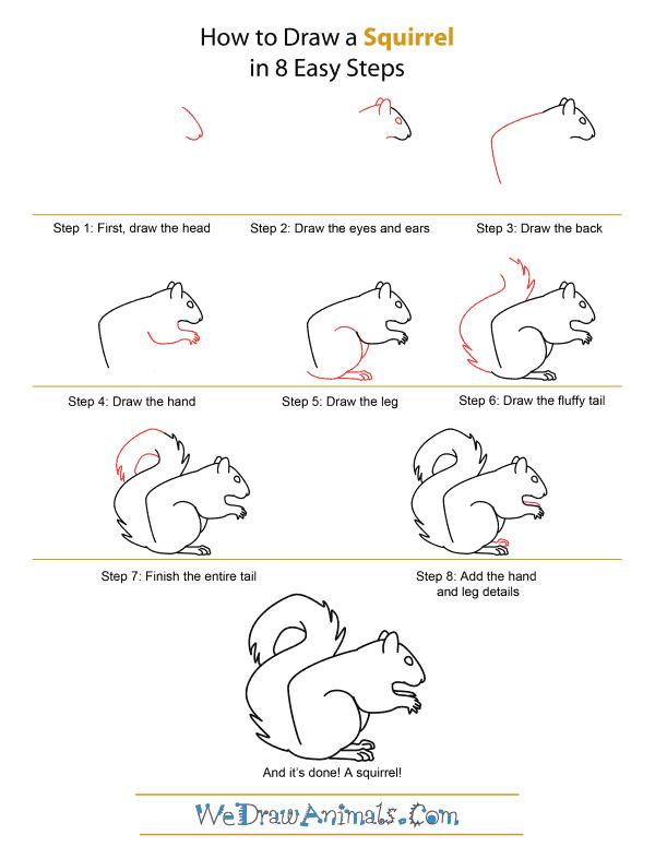 как нарисовать белку шаг за шагом