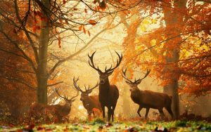 Природа раскраски