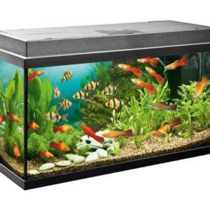 Аквариум с рыбками раскраски
