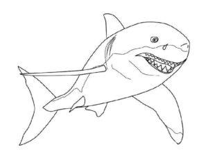Акула картинки раскраски (1)