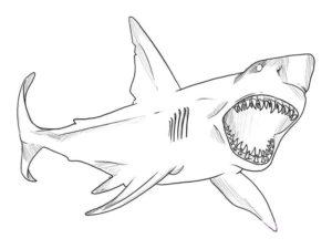 Акула картинки раскраски (10)