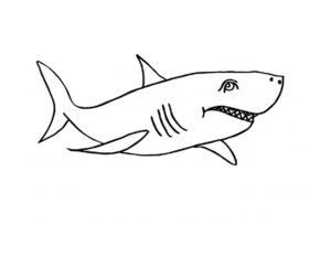 Акула картинки раскраски (14)