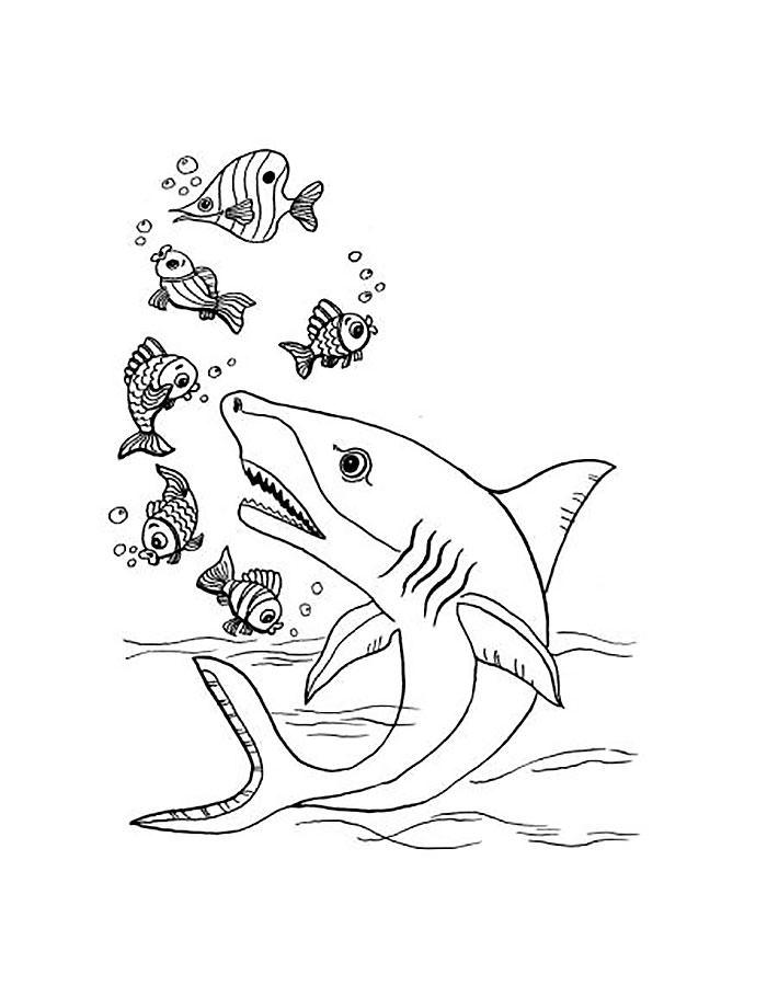 Акула картинки раскраски (16) - Рисовака