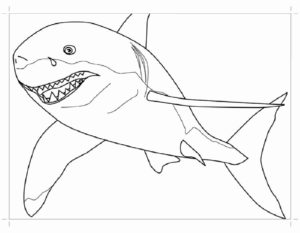 Акула картинки раскраски (19)