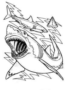 Акула картинки раскраски (24)