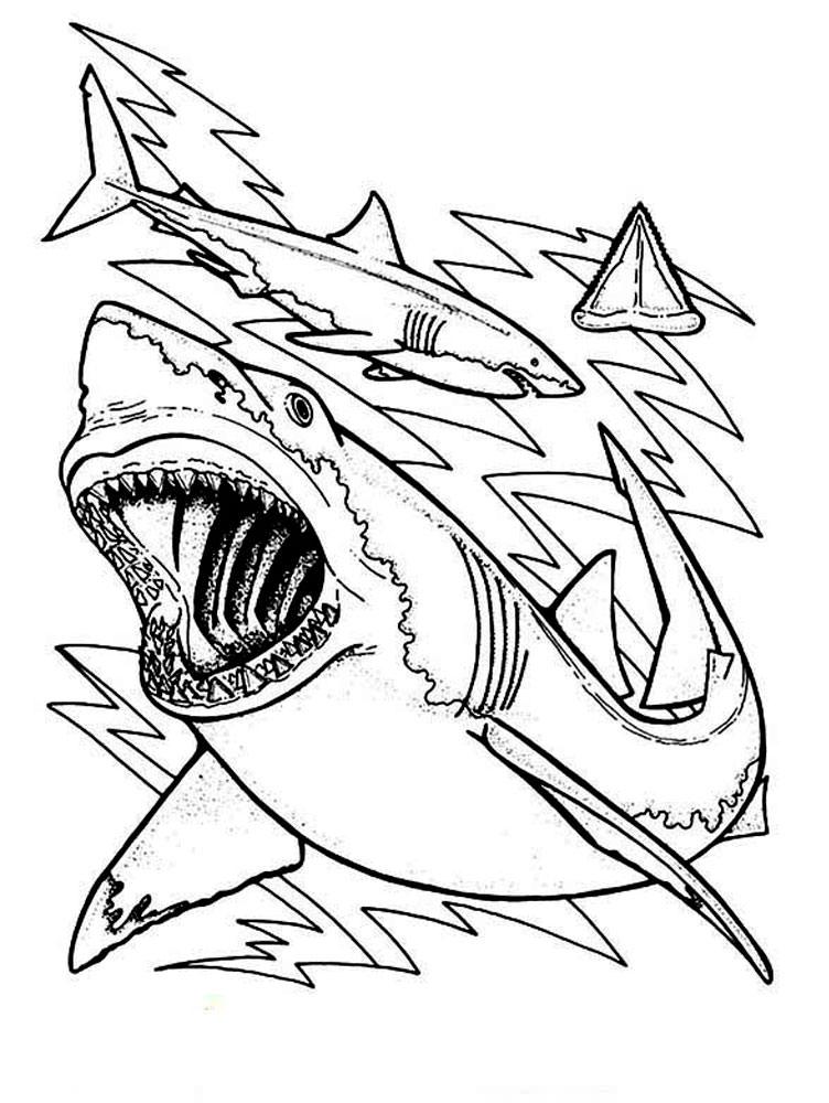 Акула картинки раскраски (24) - Рисовака