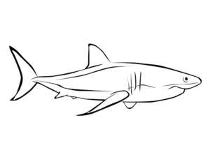 Акула картинки раскраски (26)