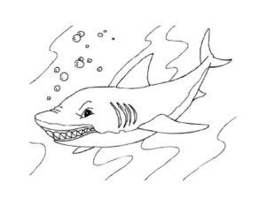 Акула картинки раскраски (27)
