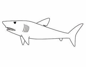 Акула картинки раскраски (29)