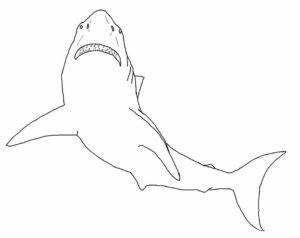 Акула картинки раскраски (30)