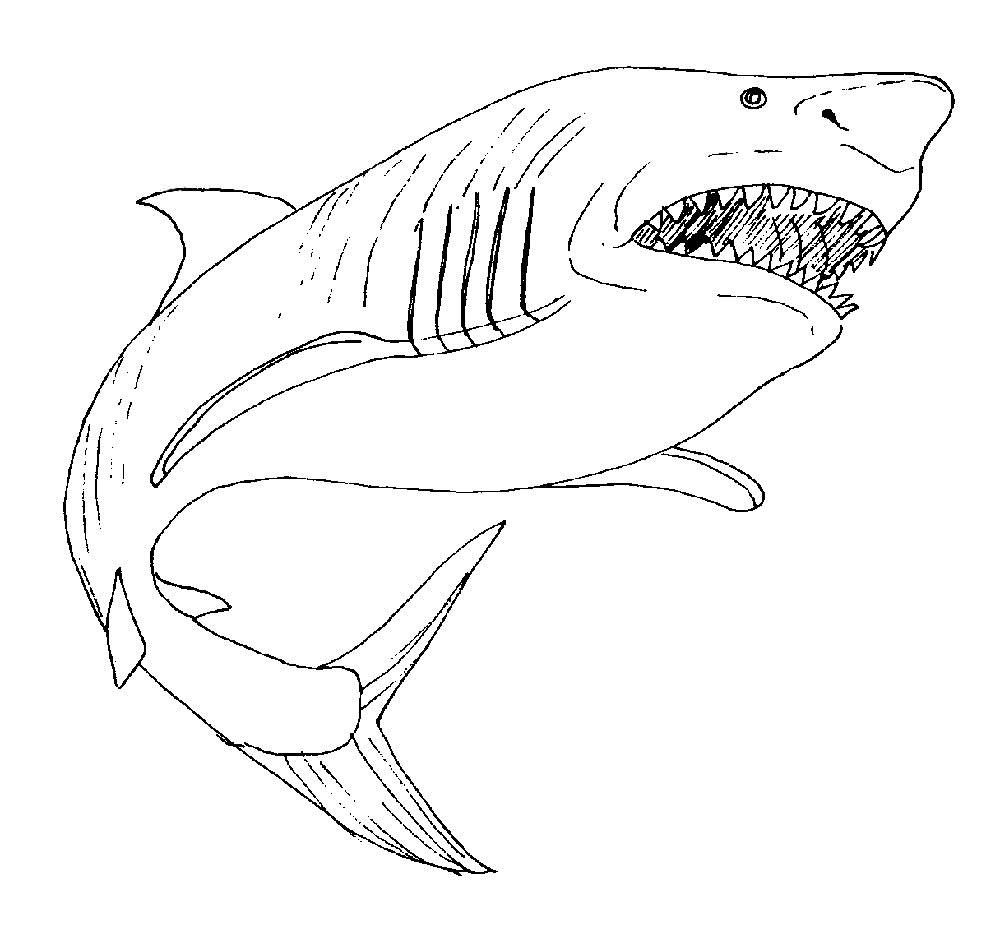 Акула картинки раскраски (31) - Рисовака