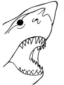 Акула картинки раскраски (32)