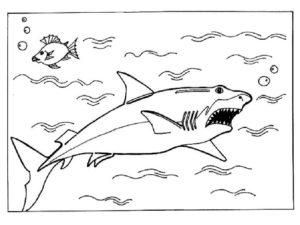 Акула картинки раскраски (33)