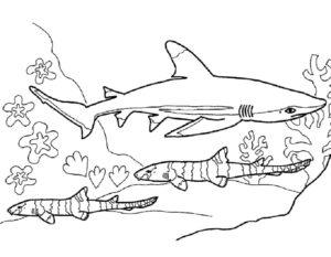 Акула картинки раскраски (35)