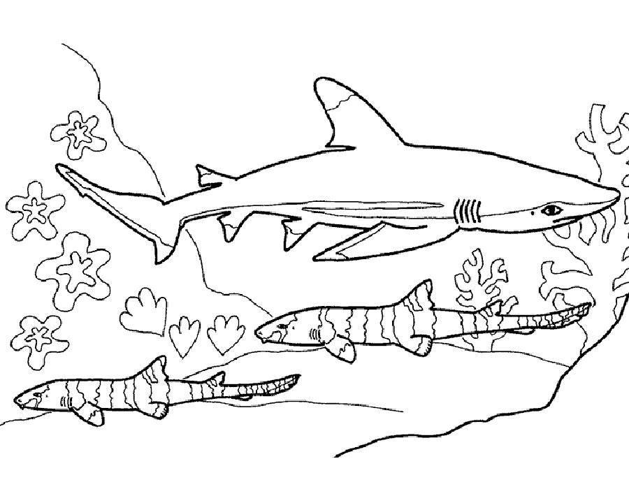 Акула картинки раскраски (35) - Рисовака