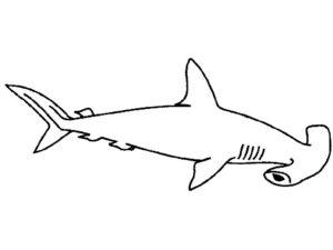 Акула картинки раскраски (36)