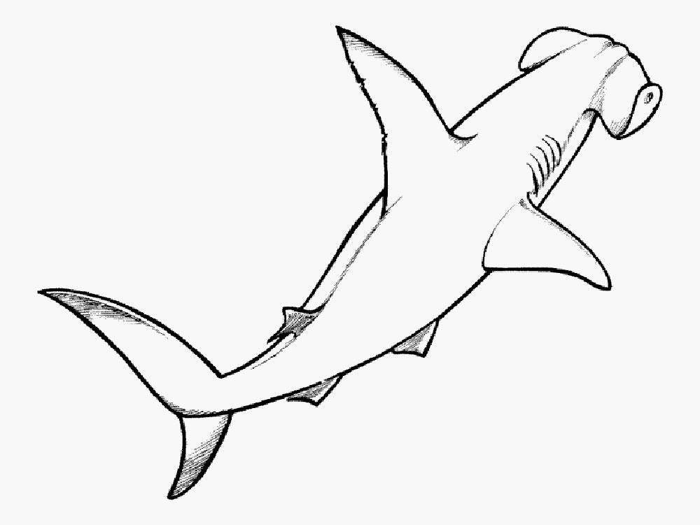 Акула картинки раскраски (37) - Рисовака