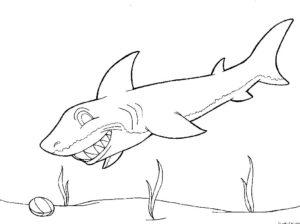Акула картинки раскраски (39)