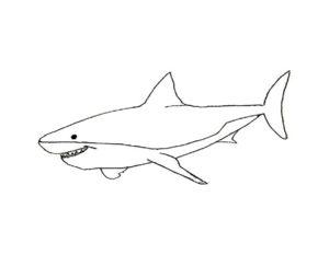 Акула картинки раскраски (40)