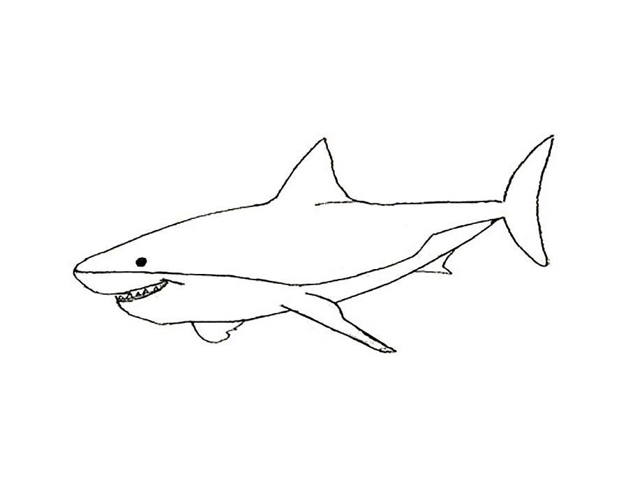 Акула картинки раскраски (40) - Рисовака
